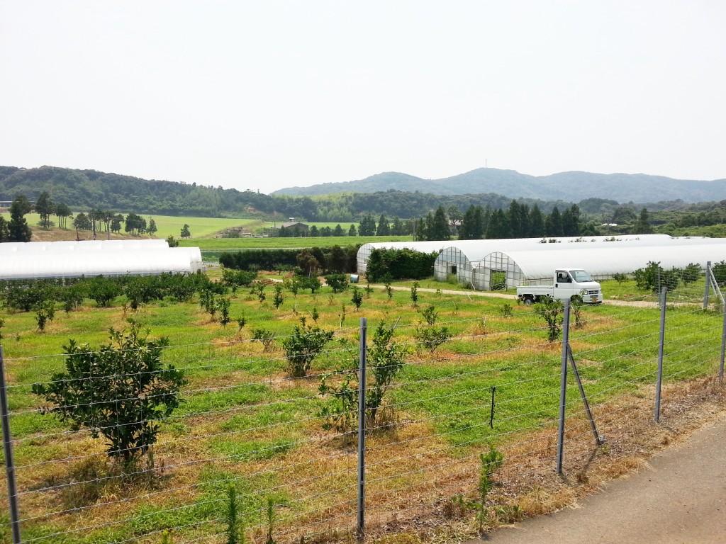 久保田農園さん3